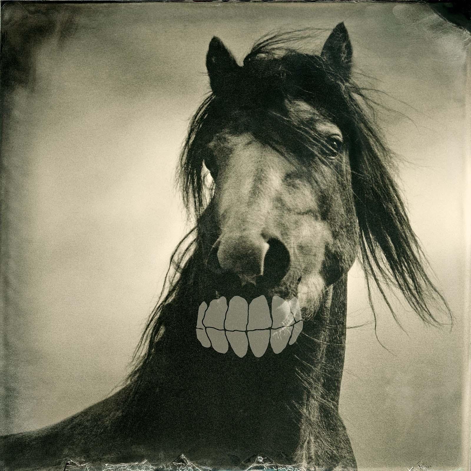 Broke Horse, 2011
