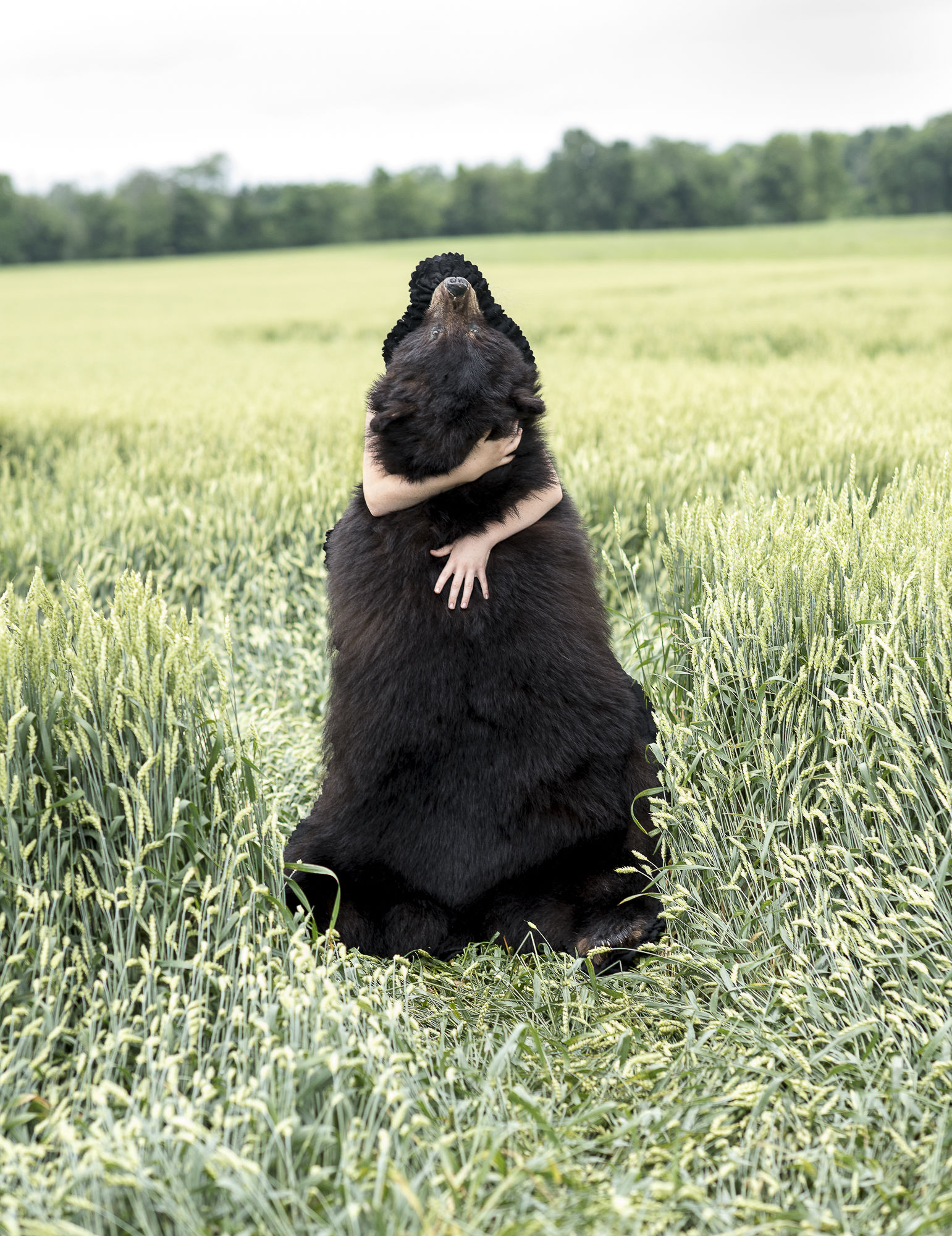 Bear Hug Collection #1