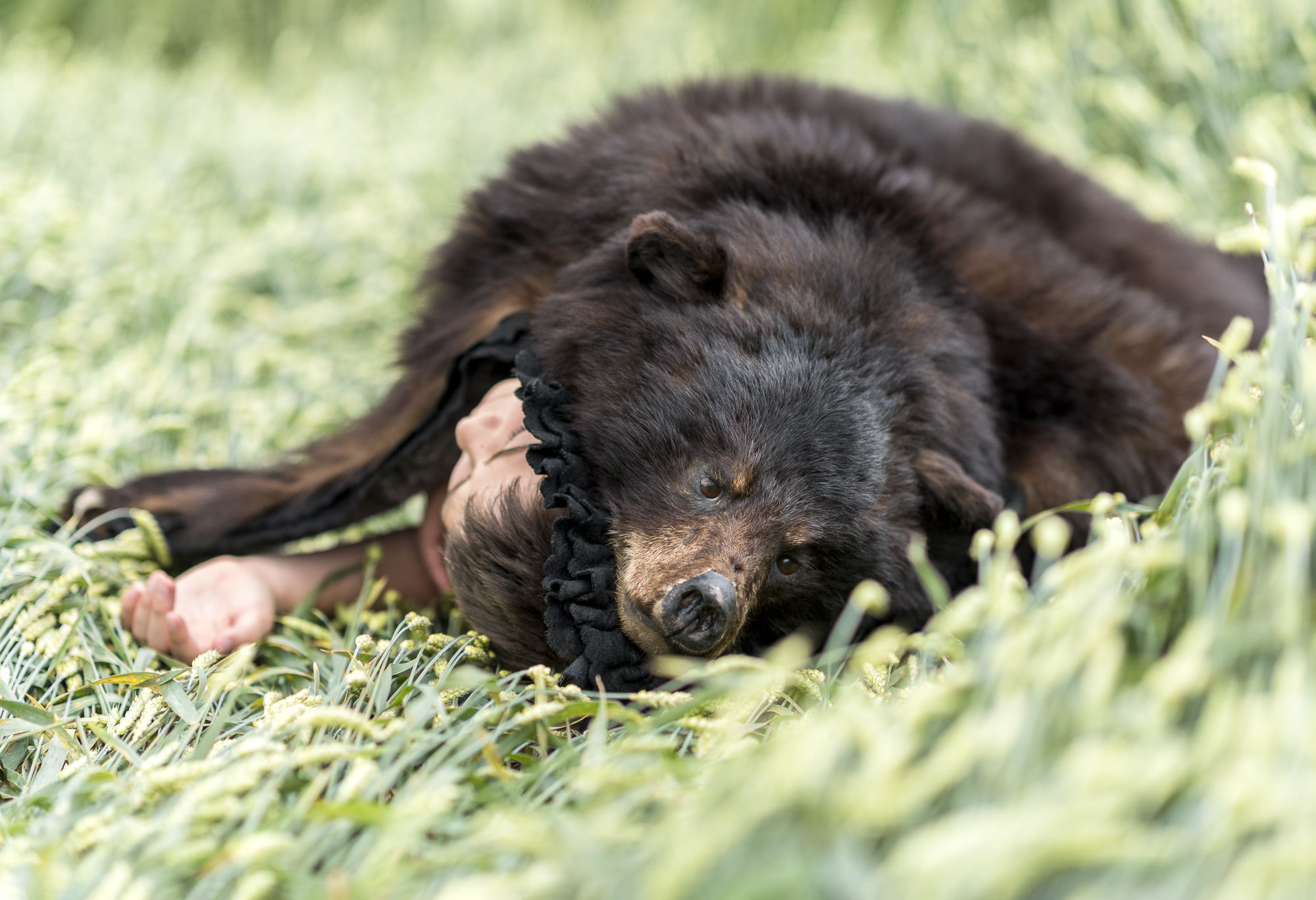 Bear Hug Collection #2